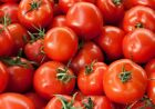 BUSH EARLY GIRL HYBRID TOMATO SEEDS * BUSH TYPE PLANT 18 INCHES* 15 SEEDS*