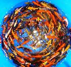 75 Lot Assorted 2 4 live koi Standard and Butterfly fin fish mixed lot PKF