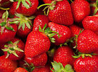 Strawberry Patch Soap Candle Making Fragrance Oil 1 16 Ounce FREE SHIPPING