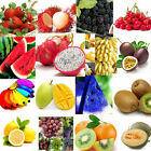 Flower Watermelon Strawberry Vegetable Tomato Fruit Seeds Potted Garden Plant