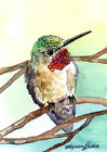 ACEO Limited Edition Summer hummer Gift idea for bird lovers