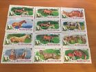 2017 TOPPS ALLEN  GINTER MINI HORSES LOT X12 TROTTER QUARTER CLYDESDALE