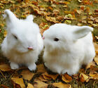 2 Mini Realistic White Rabbits Handcrafted Easter Photo Prop Rabbit Fur Bunny