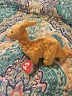 TOOTER The Dinosuar TY Beanie Babies 2002 Retired Plush Toy Animal NEW with Tags