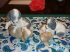 LOT OF 2  LLADRO Nao SPANIEL PUPPY Porcelain Figurine