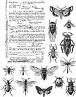 Tim Holtz Cling Mounted Stamps Entomology CMS328