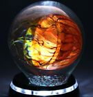 RICK SATAVA Pacific Coast JELLYFISH Art Glass PAPERWEIGHT Sculpture w Light Base