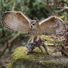 NEW Eagle Owl on Branch Figurine Life Like Figurine Statue Home Garden