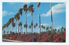 PALMS  BOUGAINVILLEA YOU SEE THEM MOST PLACE IN LOWER RIO GRANDE VALLEY TX