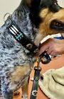 Native Look Leather Dog Collar Leash BLK SZ XXL Turquoise Conchos Hairpipe Gecko