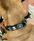 CLOSEOUT Native American Dog Collar SZ S M Turquoise Conchos Beads Hairpipe