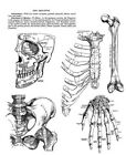 Stampers Anonymous Anatomy Chart by Tim Holtz CMS411