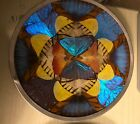 Vintage Butterfly Wing Moth Picture Plaque Wall Hanging Brazil