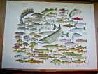 Fresh Water Fish Of North America Vintage Print Russ Smiley Blemish BARGAIN