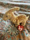 Ty Beanie Baby - TOOTER the Dinosaur (8 Inch) MINT with MINT TAGS