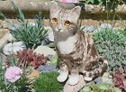 Winstanley Pottery Cat Size 3 Grey  White Cathedral Glass Eyes Signed Purrfect