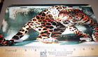Beautiful Leopard Photograph Novelty Metal License Plate fantastic collectible
