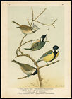Antique Print-CRESTED TIT-GREAT-COAL-MARSH-PARUS MAJOR-PL. 20-Naumann-1896