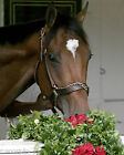 2006 Barbaro Smelling Roses Kentucky Derby Horse Racing 16 X 20 Poster Photo