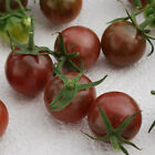 Tomato Black Cherry 25 Seeds Heirloom Non-Gmo Gluten Free AND COMBINED SHIPPING