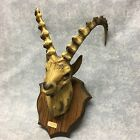 Faux Taxidermy Mountain Goat plastic France wall hanging Gag trophy