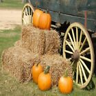 Fall Festival Fragrance Oil Candle Soap Making Supplies Free Shipping