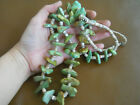 Native American Kings Manassa Turquoise Nugget + Shell Stone Bead Necklace