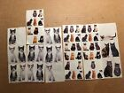 Paper House Lot Cat Stickers Kitten Tabby photo real Black White Grey IMPERFECT