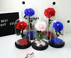 Rose in glass dome beauty and the beast Birthday gift for her Preserved rose