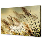 BEAUTIFUL SUNSET BREEZE DRY GRASS CANVAS WALL ART PRINT PICTURE READY TO HANG