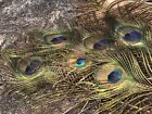 NATURAL PEACOCK TAIL FEATHERS EYES LOT Of 26 NATIVE FANS FLY TYING CRAFTS 24