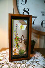 Framed Butterfly Taxidermy Glass See Through Window Wall Hanging B9 6 27