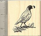 Beautiful Quail rubber stamp H9013 wood mounted