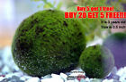 Marimo Moss Ball live aquarium plant java fish tank O