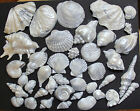 40 Beach Shells Sea  gum paste fondant gray/silver Wedding Birthday  Cake topper