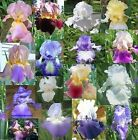 #LOT 12 FRESH SPROUTED/ROOTED MIXED BEARDED IRIS FLOWERS RHIZOME BULBS ROOTS
