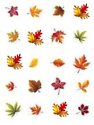 Fall Leaves Waterslide Water Transfer Nail Decals Nail Art