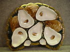 Beautiful German Germany Oyster Plate