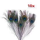 10pcs x Natural Peacock Tail Feathers Natuatal Color T1