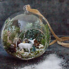 Hanging Globe Round Glass Terrarium Air Plant Candle Holder Clear