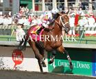 BIG BROWN 2008 Kentucky Derby Champion Horse Racing 8 x 10 Photo