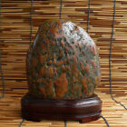 005 Bonsai Suiseki Natural Yangtze River Stone Beautiful Viewing