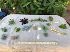 10 Succulent Cuttings Lot Unique Vivid Colors Lucky Plants Mixed Variety