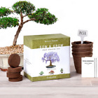 Natures Blossom Bonsai Tree kit Grow 4 Bonsai Trees From Seed Complete Set