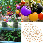 100 Pcs Rainbow Tomato Seeds Colorful Bonsai Organic Vegetables Seed Home Garden