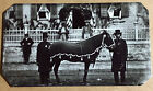 tintype Of President Abraham Lincoln's Horse Robin Civil War  C884RP