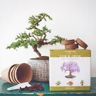 Natures Blossom Bonsai Tree Starter Kit Indoor Grow Kit to Grow 4 Bonsai Tree