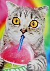 Silly Cat with Pink Slushie Funny Avanti Birthday Card