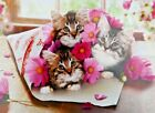 Sweet Kittens Wrapped up Envelope with Flowers Funny Avanti Birthday Card
