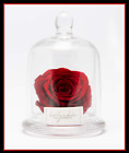 3 Forever Flower Enchanted Red Rose Preserved in Glass Dome Mothers Day Gift